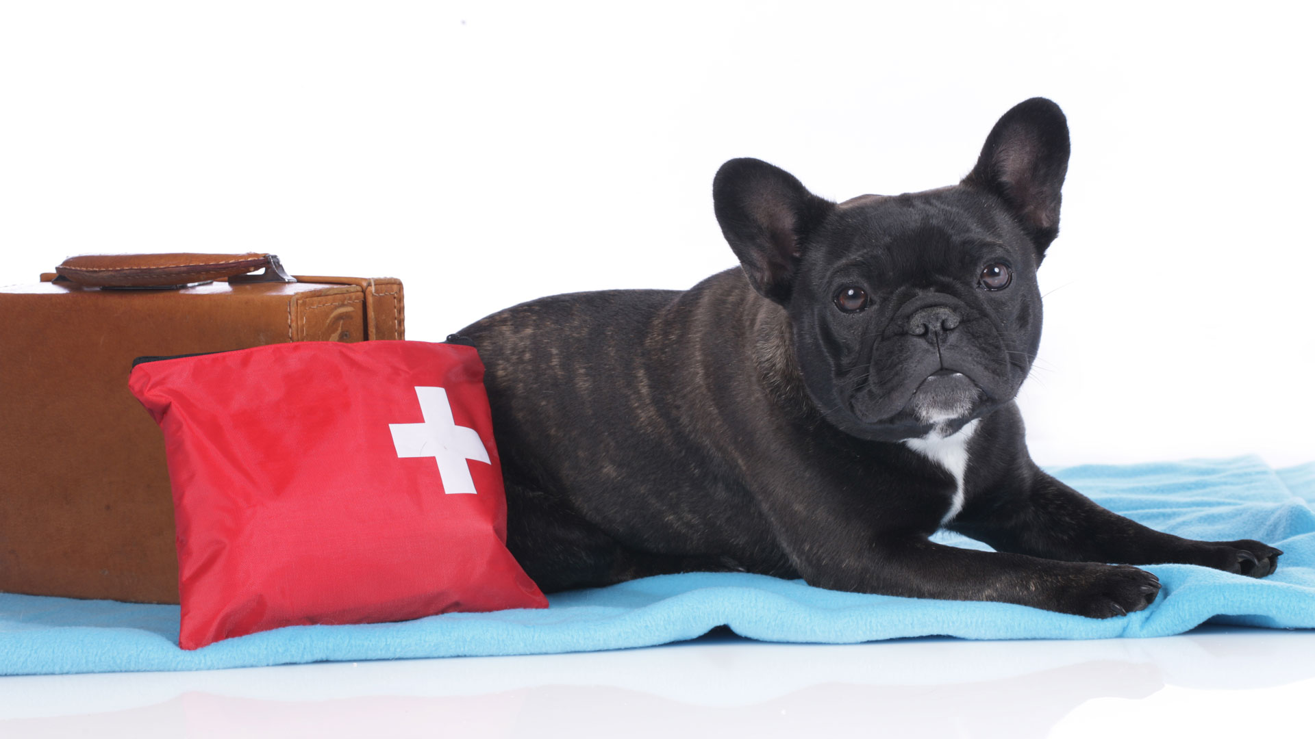 Pet Cpr First Aid Tiptoptails Michigan Dog Training